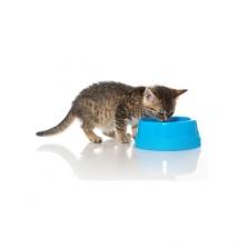 Katzennahrung