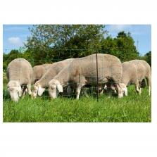 Schafhaltung - Schafhaltung